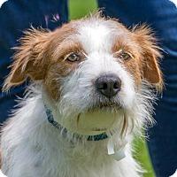 Adopt A Pet :: ASHLEY - Fernandina Beach, FL