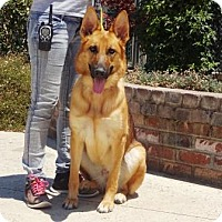 Adopt A Pet :: Brandy - Lathrop, CA
