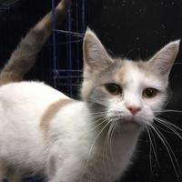 Adopt A Pet :: Tessa - Salem, OH