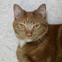 Adopt A Pet :: Beckham - St. Petersburg, FL
