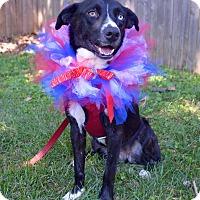 Adopt A Pet :: Gypsy **$20 Adoption fee** - Staten Island, NY