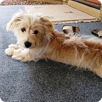 Adopt A Pet :: Wrigley - Gilbert, AZ