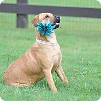 Adopt A Pet :: Kona - Tomball, TX