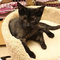 Adopt A Pet :: Ash - Richmond Hill, ON
