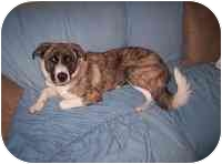 Great Pyrenees Mix Puppy for adoption in Carrollton, Texas - Sinead