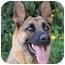 Photo 1 - German Shepherd Dog Dog for adoption in Los Angeles, California - Fina von Felsberg