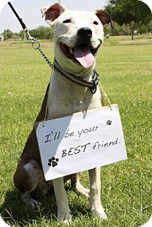 American Staffordshire Terrier Mix Dog for adoption in Gilbert, Arizona - Nala