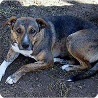 Adopt A Pet :: Savannah - Glenpool, OK