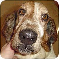 Adopt A Pet :: Nick - Phoenix, AZ