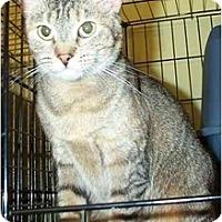 Adopt A Pet :: Snuggles - Acme, PA