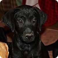 Adopt A Pet :: Sasha - PENDING, in ME - kennebunkport, ME