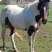 Adopt A Pet :: Maui - Aumsville, OR