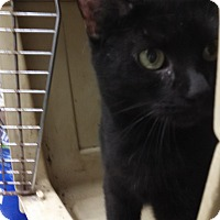 Adopt A Pet :: Skyler - Willington, CT
