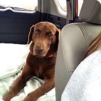 Adopt A Pet :: Zeke - Cumming, GA