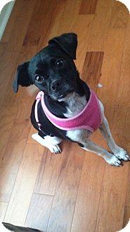 Terrier (Unknown Type, Medium) Mix Puppy for adoption in Killian, Louisiana - Pixie