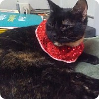 Domestic Shorthair Cat for adoption in Battle Creek, Michigan - Gigi