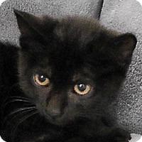 Adopt A Pet :: Remington - Redondo Beach, CA