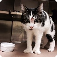Adopt A Pet :: Duke (Petvalu east Windsor) - Trenton, NJ