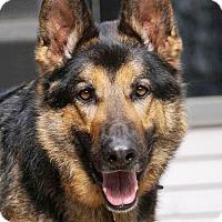 Adopt A Pet :: Thor - Wayland, MA