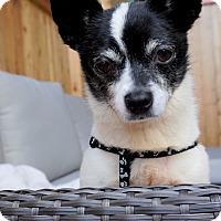 Adopt A Pet :: Hickory - Seattle, WA