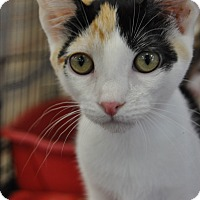 Adopt A Pet :: Minnie - La Canada Flintridge, CA