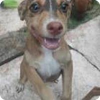Adopt A Pet :: Frida - Rexford, NY
