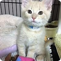 Adopt A Pet :: Salmon - Medina, OH