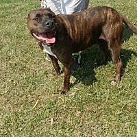 Adopt A Pet :: Ruby - Trenton, MO
