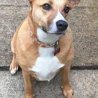 Adopt A Pet :: Peanut Butter - Little Rock, AR
