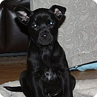 Adopt A Pet :: Annabelle - PENDING, in Maine - kennebunkport, ME
