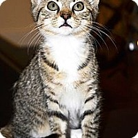 Adopt A Pet :: Avie - Xenia, OH