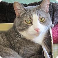 Adopt A Pet :: Timmy - Prescott, AZ