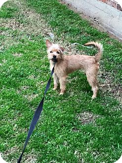Terrier (Unknown Type, Medium) Mix Dog for adoption in Stephenville, Texas - Hailey