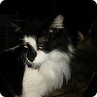 Adopt A Pet :: Hooter - Delmont, PA