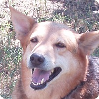 Adopt A Pet :: Laney - Dripping Springs, TX