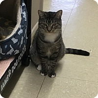 Adopt A Pet :: Toby - Whitehall, PA