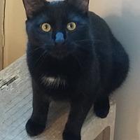 Adopt A Pet :: Ascot - Parkton, NC