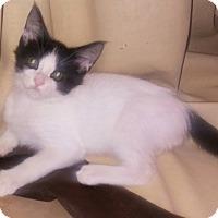 Adopt A Pet :: Sherman - Centerton, AR