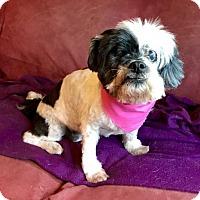 Adopt A Pet :: Bea - Loganville, GA