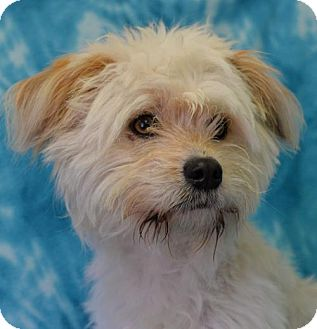 Terrier (Unknown Type, Medium) Mix Dog for adoption in Eureka, California - Monte