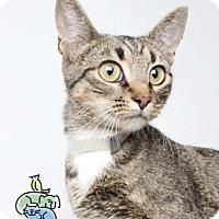 Adopt A Pet :: Eve - Knoxville, TN