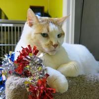 Adopt A Pet :: Miss Jackson - Northbrook, IL