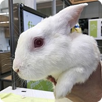 Adopt A Pet :: Malcolm - Los Angeles, CA