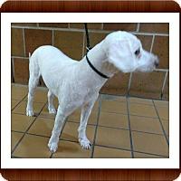 Adopt A Pet :: Thor - IL - Tulsa, OK
