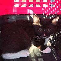 Adopt A Pet :: Manny - East Brunswick, NJ