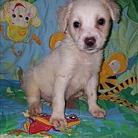 Adopt A Pet :: Dailey - Niagra Falls, NY