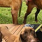 Adopt A Pet :: Paul