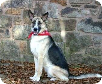German Shepherd Dog Mix Dog for adoption in Muldrow, Oklahoma - Toby