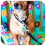 Photo 3 - Australian Cattle Dog/Dachshund Mix Dog for adoption in Houston, Texas - Sophie