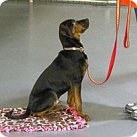 Adopt A Pet :: Mack - Burr Ridge, IL